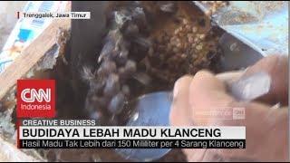 Meraup Untung dari Budidaya Lebah Madu Klanceng