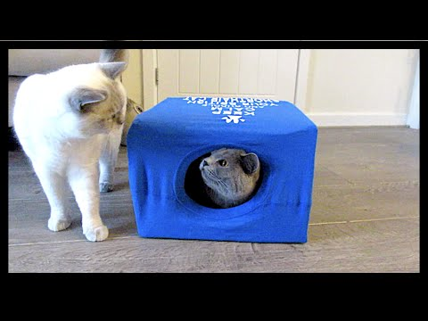 British shorthair t shirt cat box chris eve youtube for Make a cat bed out of a box