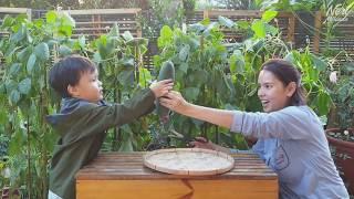Tayo na at mag harvest ng Pipino kasama ni Miggy Miranda!  Neri&#39s Vlogs  Neri Miranda