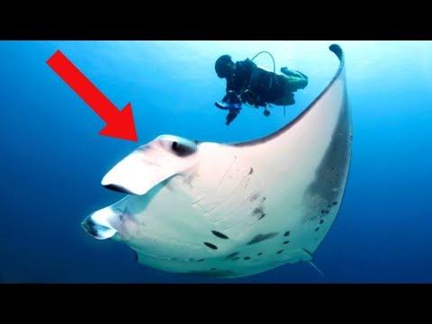 LARGEST Animals in the Ocean