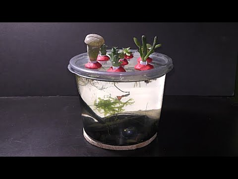 How To Make Succulents Aquarium Garden