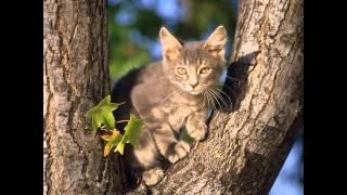 My Cat Clans~GorgeClan