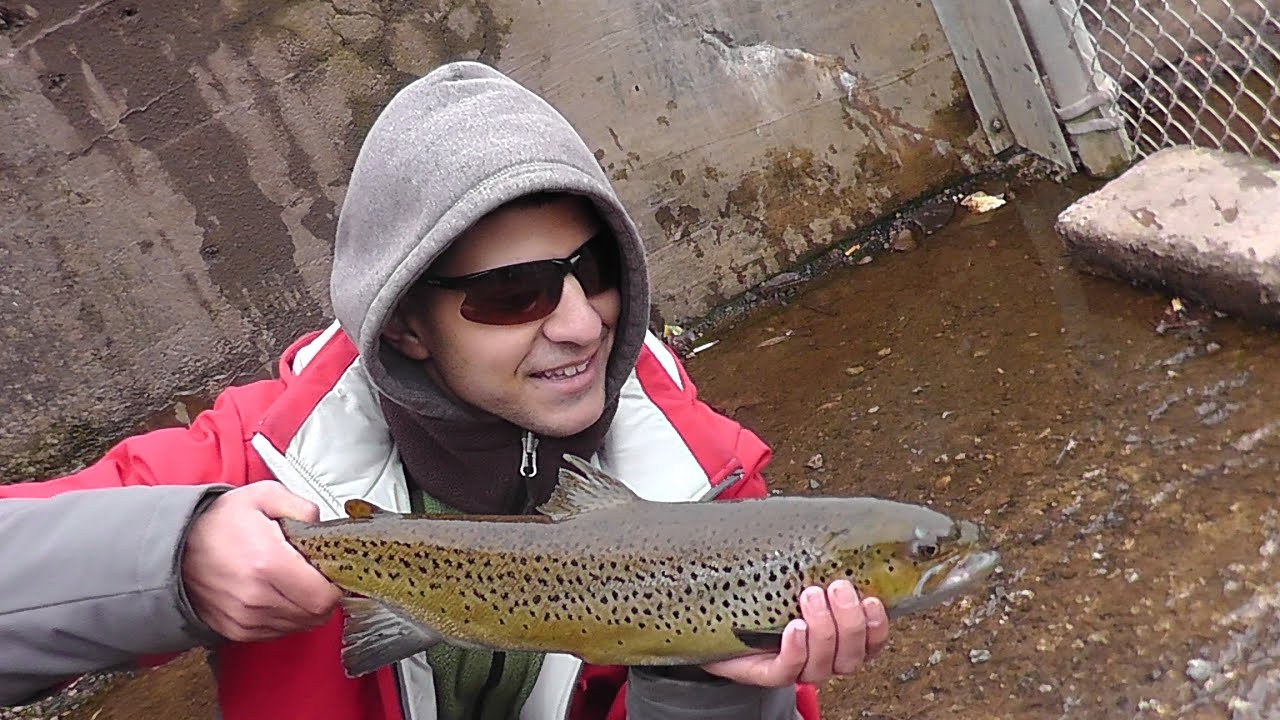 December brown trout fishing oak orchard 2014 youtube for Oak orchard fishing report