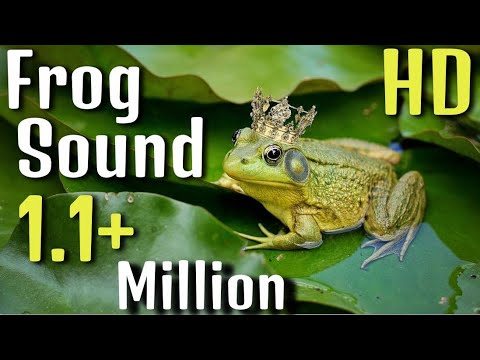 Frog Sound Effect (Best audio quality)