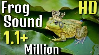 Frog Sound Effect