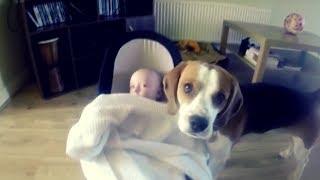 Эту собаку оставили одну с ребенком и записали все на видео камеру