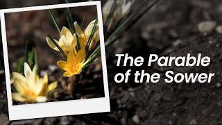 The Parable of the Sower | February 14th, 2021