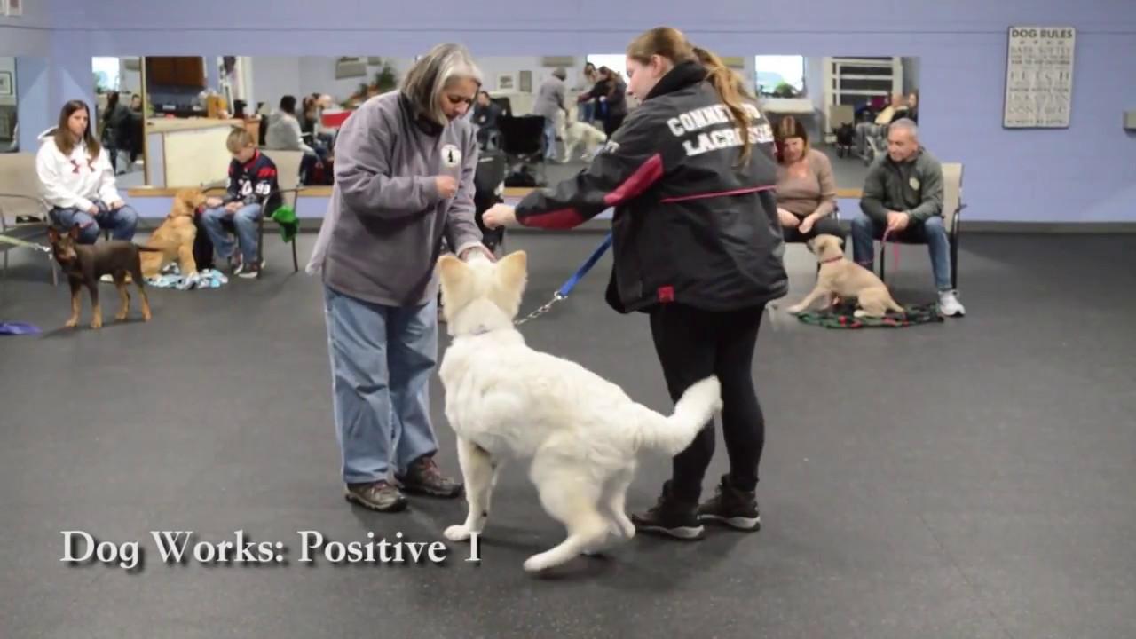 Dog Works Canine Form & Function – It Works