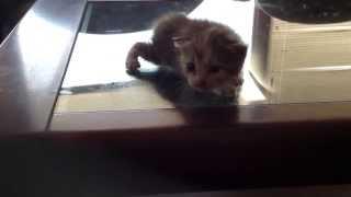 可愛いすぎる!ほぼ生まれたて 子猫の動画