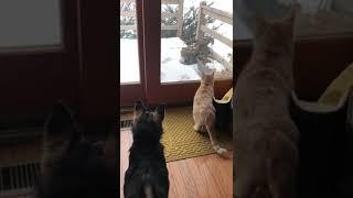 Сбитая в Астраханской области собака улетела в Америку