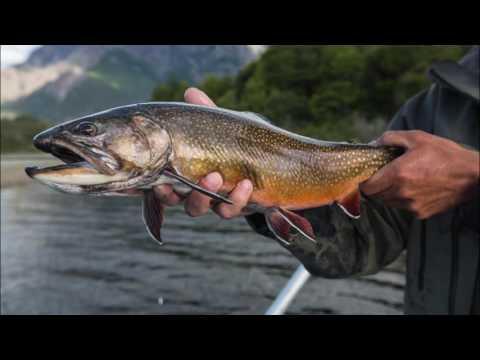 Patagonia Fly Fishing at Rio Manso Lodge