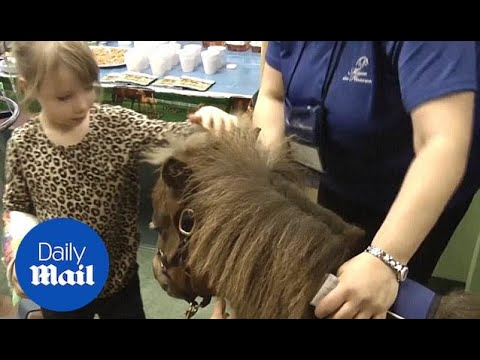 Miniature horses bring their healing power to sick children - Daily Mail
