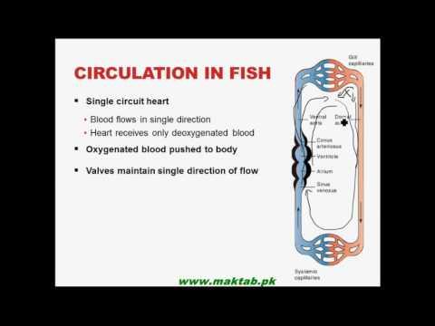 FSc Biology Book1, CH 14, LEC 8: Closed Circulatory System