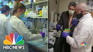 Coronavirus: Top Labs See Real Progress On Immunity, Vaccine | NBC Nightly News