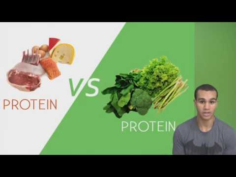 Plant Protein Is Better Than Animal Protein