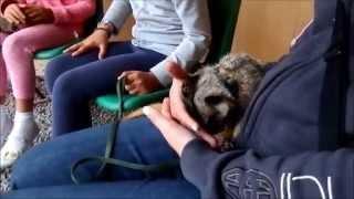 Meerkat Animal Experience