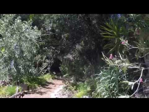 Amir's Garden - Los Angeles Hikes