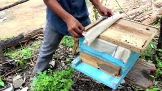 Beekeeping Training Video