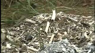 Thousands of human bones found piled up in Bisbee