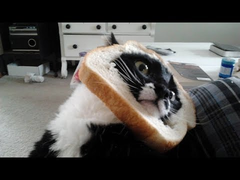 CATS THAT will make you FALL OFF YOUR CHAIR because of LAUGHING - Funny CAT compilation