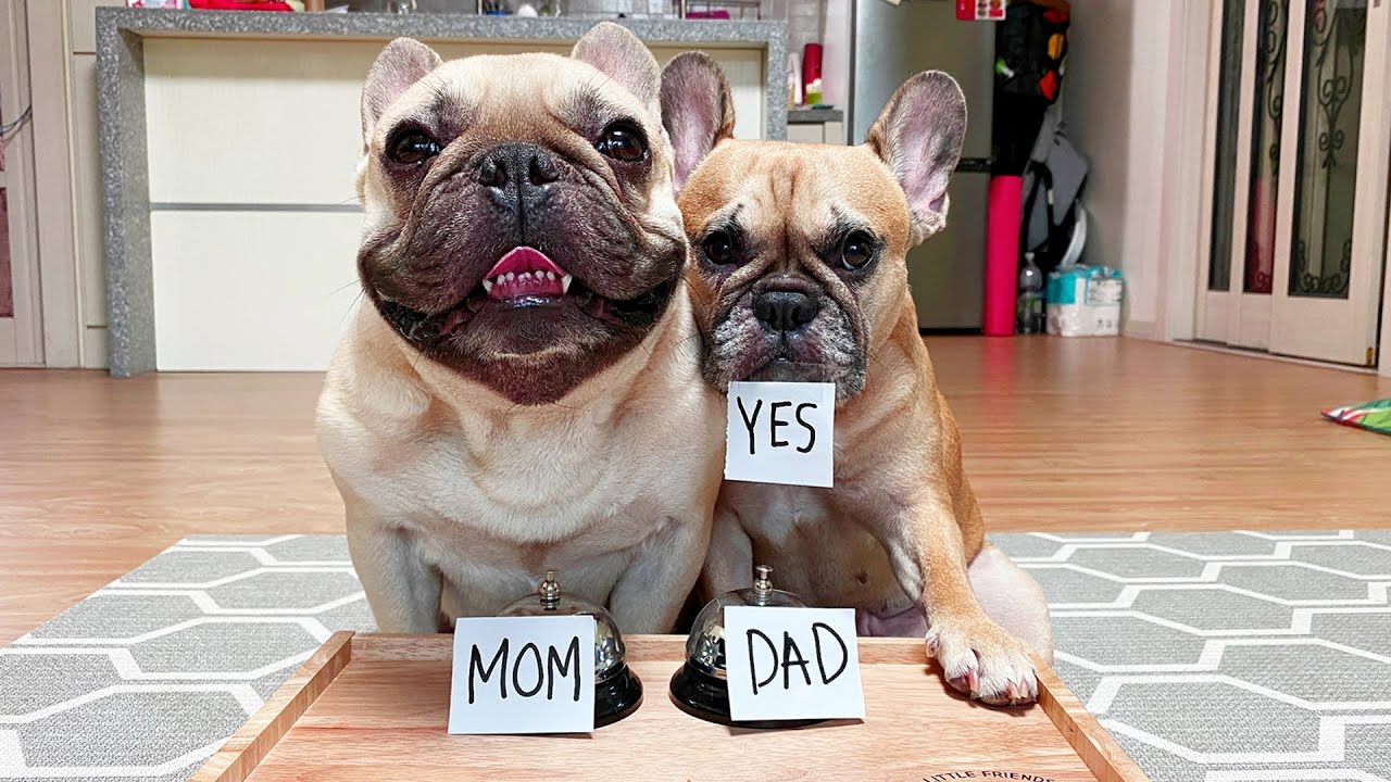 My Dogs Tell Me How They Really Feel | Funny Q&A With French Bulldogs