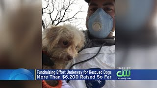 Fundraising Effort Underway For Dogs Found At Shamong Puppy Mill