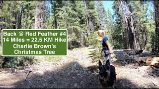 Halfway Point - 14 Mile = 22.5KM Hike at Red Feather Hiking with German Shepherd 4 of 6