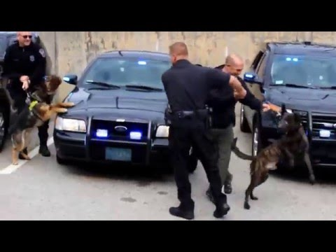 Police K9 Axel's Last Shift Surprise Greeting