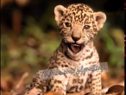 tiger-singing-happy-birthday