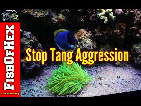 How To Deal With Tang Aggression | Adding The New Tangs