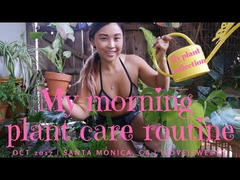 My morning plant care routine | October 2017 | ILOVEJEWELYN