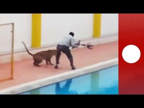 Un leopardo suelto dejó tres heridos en una escuela