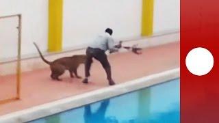 Leopard runs wild around India school, mauls 6 people