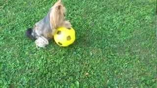 Funny Videos Dog !!!!!!!!!!!!!!!!!!!!!!!