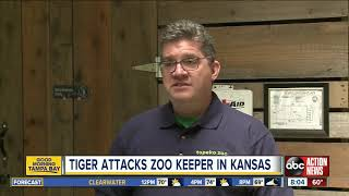 A zookeeper suffered 'lacerations and punctures' in a tiger attack at the zoo in Topeka, Kansas thumbnail