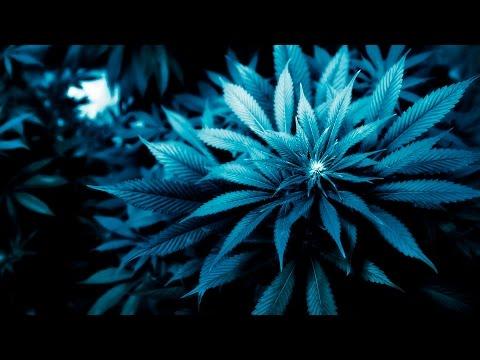 Illinois lawmakers propose legalizing recreational marijuana