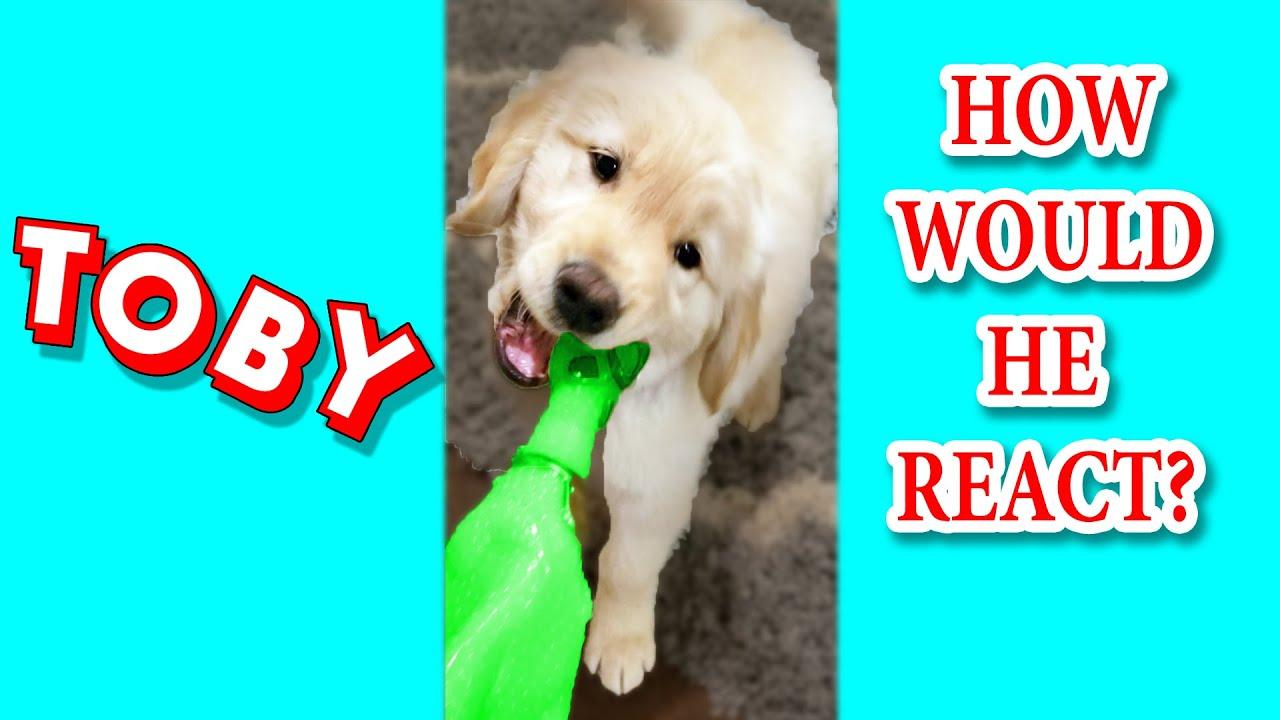 Watch Puppy reacts to sound of a chimken 😂