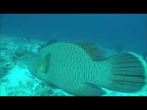 Maldives 05 Oct 2016
