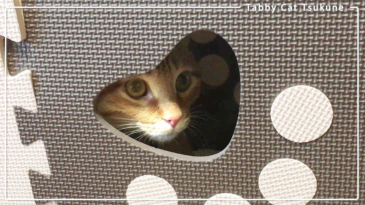 ストレス解消?マットくり抜く可愛い猫パンチ🐾【茶トラねこ】