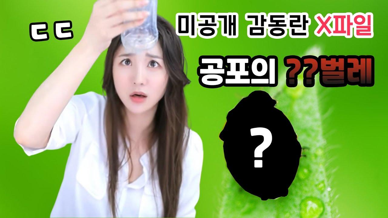 감동란 약점 최초공개