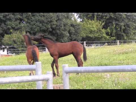 2014 colts roughhousing