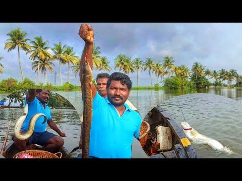 വാളക്ക് ചൂണ്ടകെട്ടി വലഞ്ഞിലും  കിട്ടി   Kerala  river fishing fishing malayalam