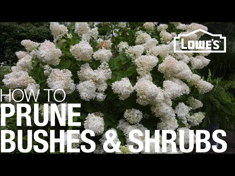 How to Prune, Trim & Shape Your Bushes & Shrubs