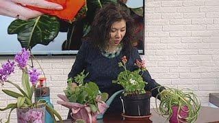Советы ландшафтного дизайнера: уход за комнатными растениями зимой