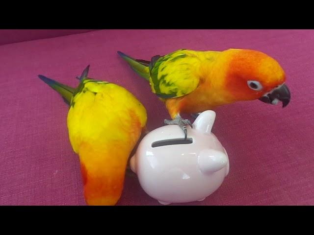 Ekonomická výchova papoušk?