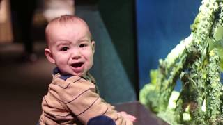 funny babies and animals fails