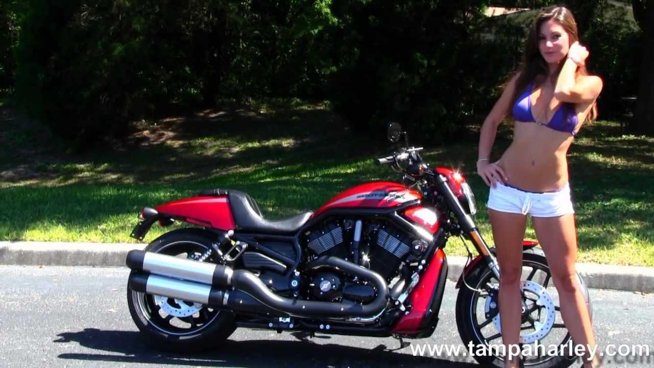 2013 Harley Davidson Vrsc Night Rod Special: New 2013 Harley-Davidson Motorcycles VRSCDX Night Rod