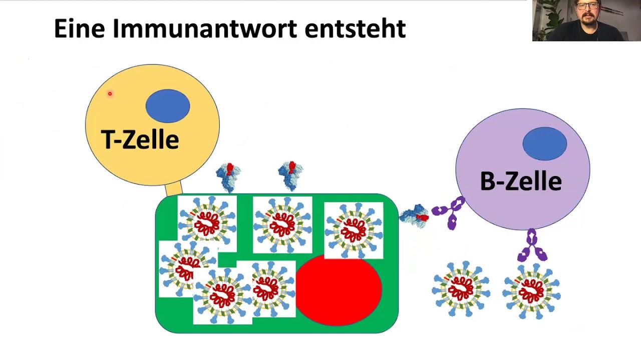 corona impfstoffe im zeitraffer