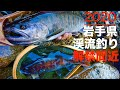 岩手県 渓流釣り ~晩秋の尺ヤマメ!!~ 2019年9月29日 Fishing in Iwate, Japan