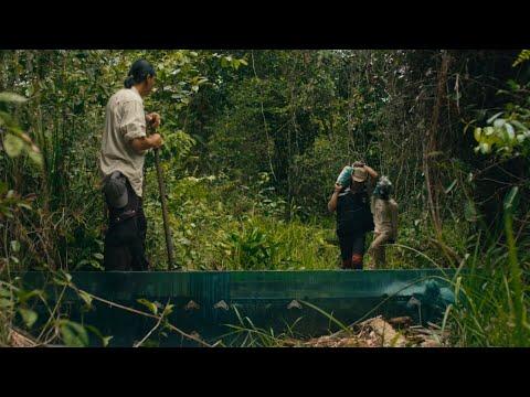 The conservationists of Katingan Mentaya